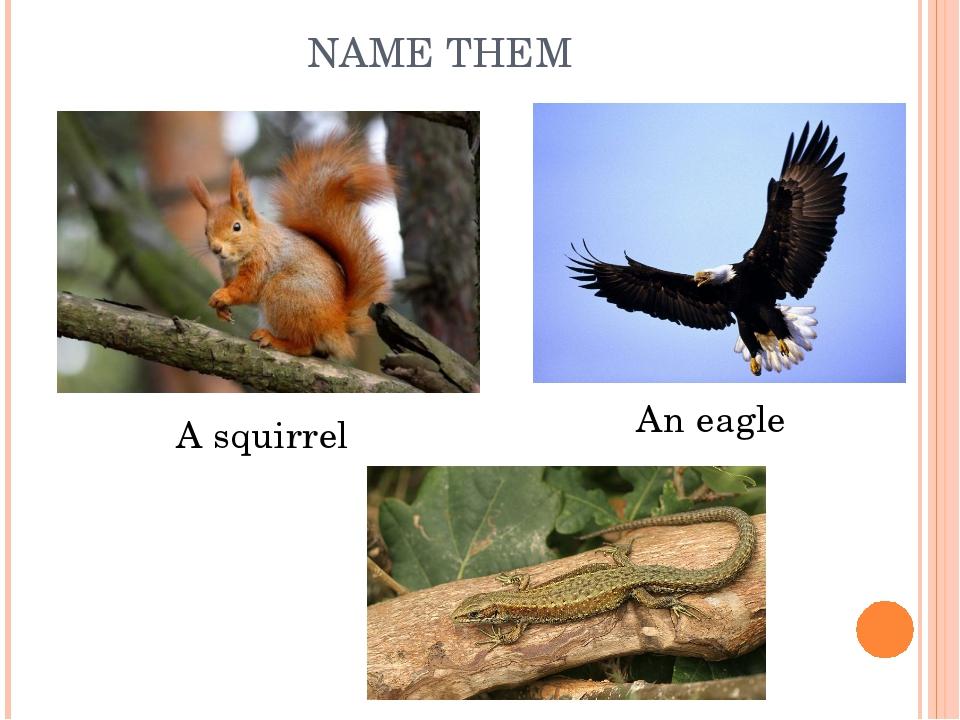 NAME THEM An eagle A squirrel