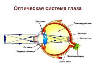 Оптическая система глаза Желтое пятно Слепое пятно На слайде «активна» стрелк