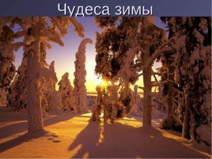 Чудеса зимы