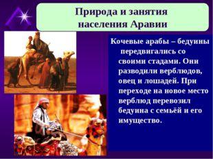 Кочевые арабы – бедуины передвигались со своими стадами. Они разводили верблю