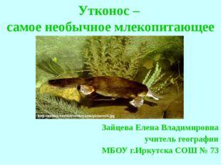 Утконос – самое необычное млекопитающее Зайцева Елена Владимировна учитель ге