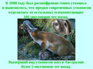Вымерший вид утконосов жил в Австралии более 5 миллионов лет назад. В 2008 го