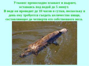 Утконос превосходно плавает и ныряет, оставаясь под водой до 5 минут. В вод