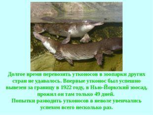 Долгое время перевозить утконосов в зоопарки других стран не удавалось. Вперв