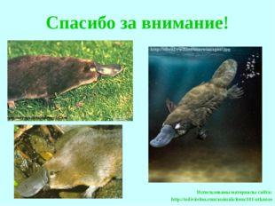 Спасибо за внимание! Использованы материалы сайта: http://udivitelno.com/ani