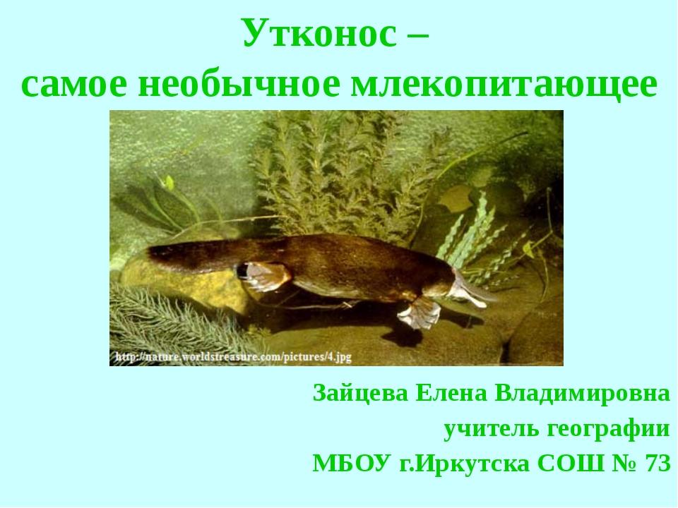 Утконос – самое необычное млекопитающее Зайцева Елена Владимировна учитель ге...