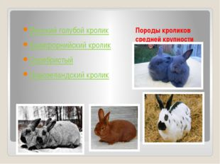 Породы кроликов средней крупности Венский голубой кролик Калифорнийский кроли
