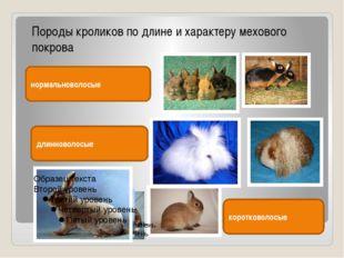Породы кроликов по длине и характеру мехового покрова нормальноволосые длинн