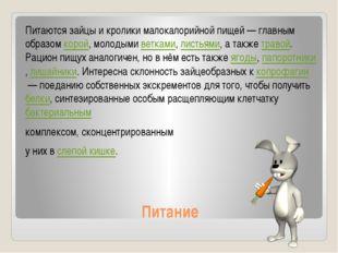 Питание Питаются зайцы и кролики малокалорийной пищей— главным образомкорой