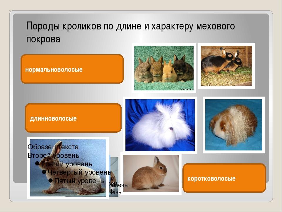 Породы кроликов по длине и характеру мехового покрова нормальноволосые длинн...