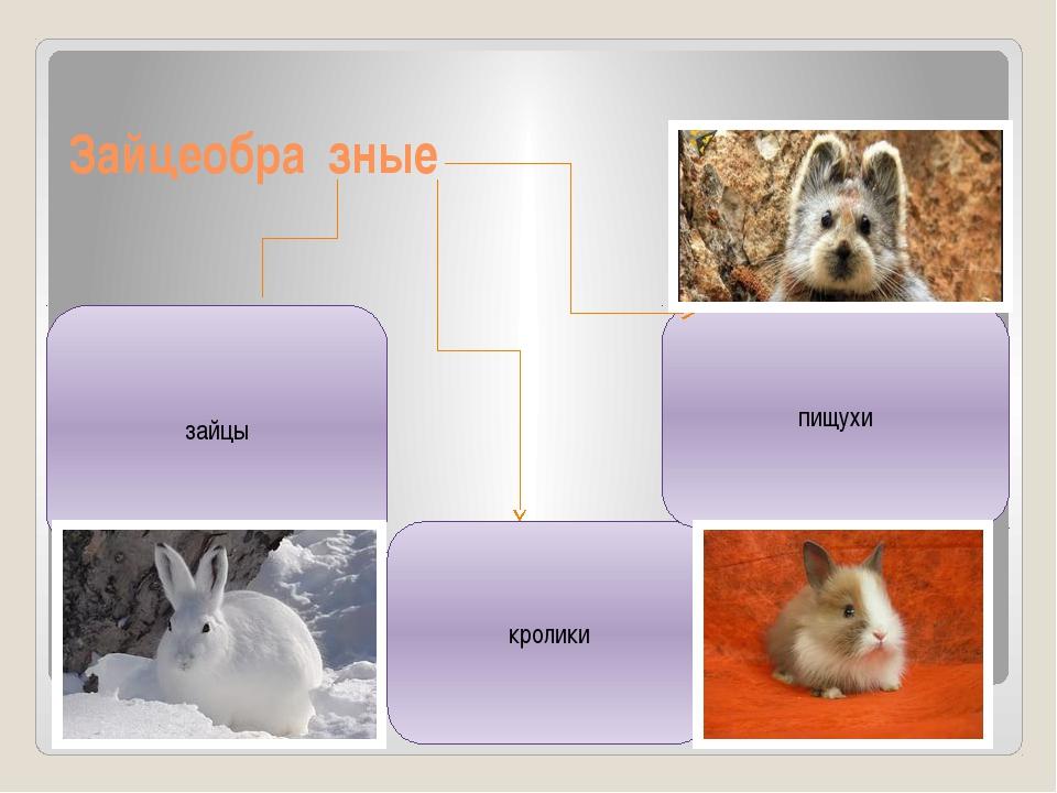 Зайцеобра́зные кролики пищухи зайцы