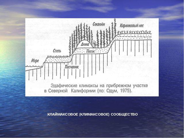 КЛАЙМАКСОВОЕ (КЛИМАКСОВОЕ) СООБЩЕСТВО