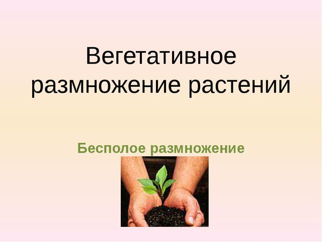 Вегетативное размножение растений Бесполое размножение
