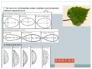 Г. Тип листа по соотношению длины, ширины и расположению наиболее широкой час