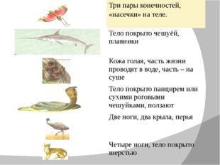 Три пары конечностей, «насечки» на теле. Тело покрыто чешуёй, плавники Кожа