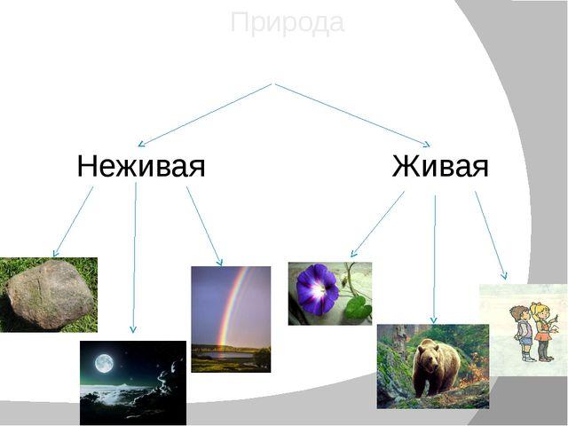 Природа Неживая Живая