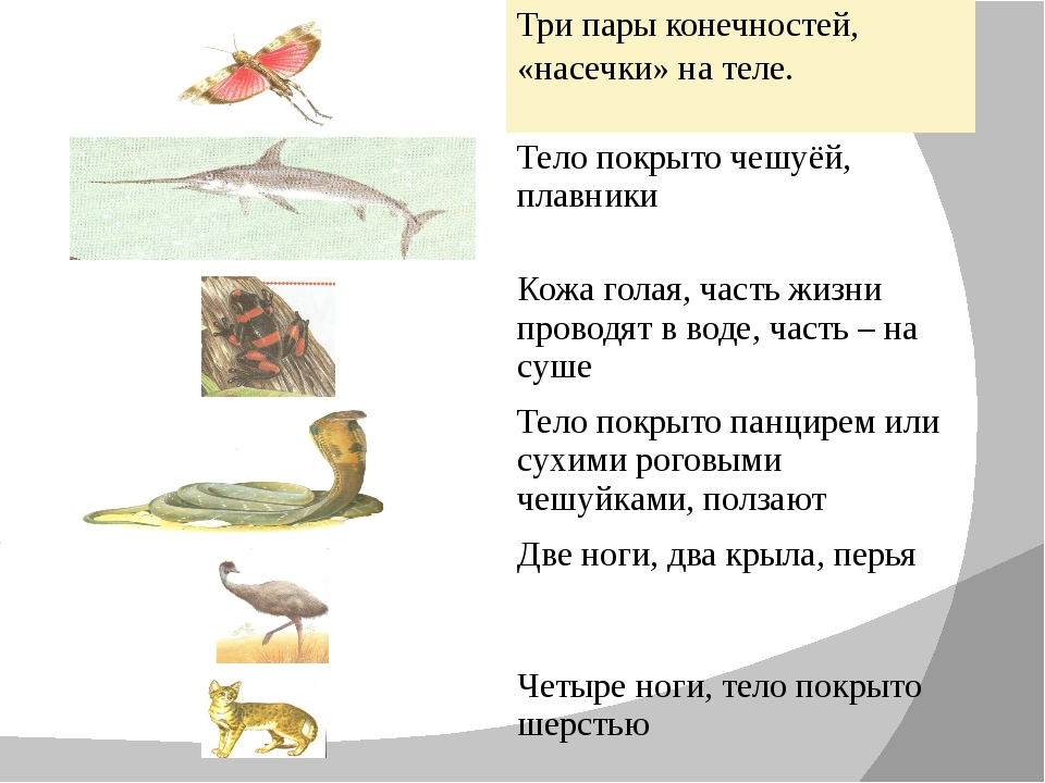 Три пары конечностей, «насечки» на теле. Тело покрыто чешуёй, плавники Кожа...