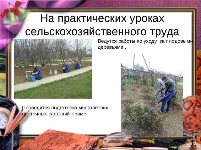 На практических уроках сельскохозяйственного труда Ведутся работы по уходу за...