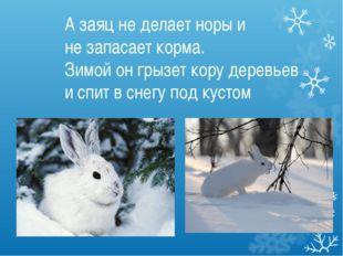 А заяц не делает норы и не запасает корма. Зимой он грызет кору деревьев и сп
