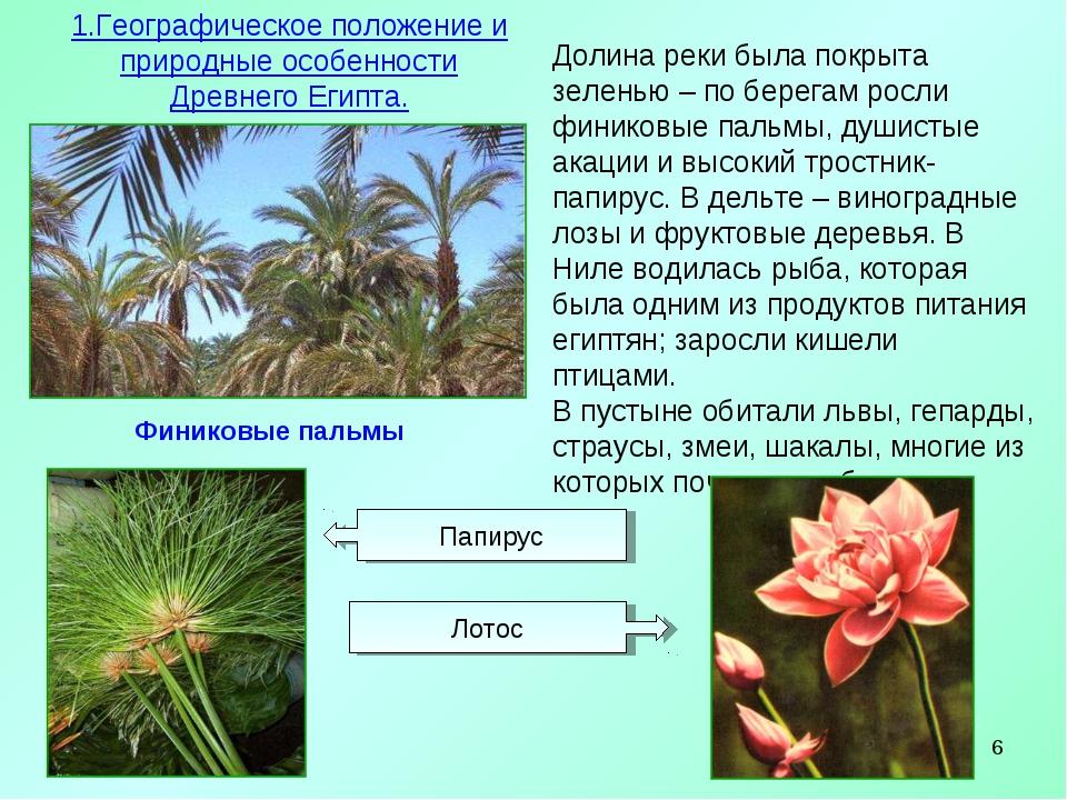 * Финиковые пальмы 1.Географическое положение и природные особенности Древнег...