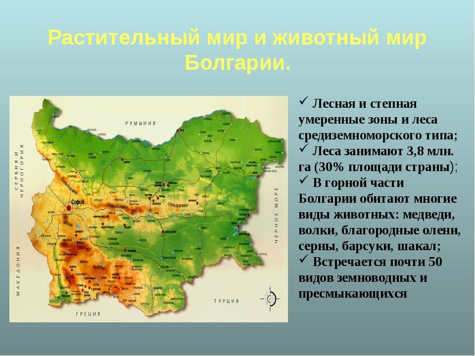 Растительный мир и животный мир Болгарии. Лесная и степная умеренные зоны и...