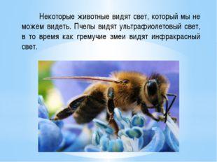 Некоторые животные видят свет, который мы не можем видеть. Пчелы видят ультр