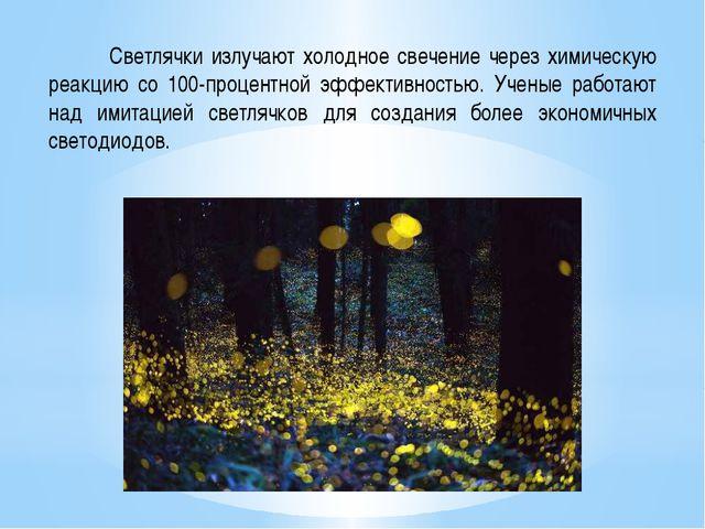 Светлячки излучают холодное свечение через химическую реакцию со 100-процент...