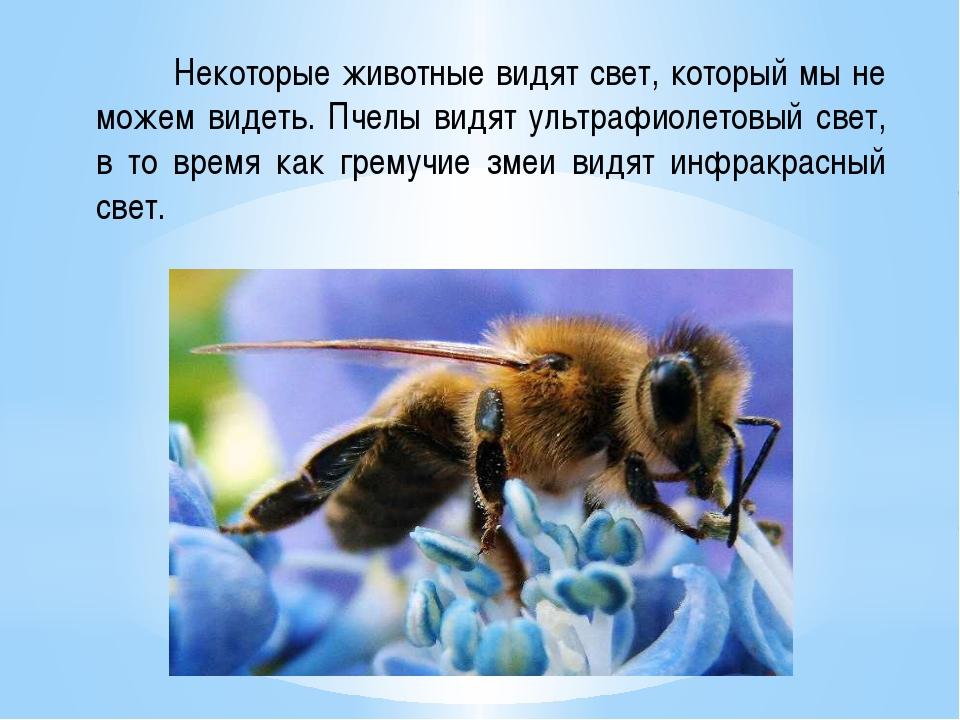Некоторые животные видят свет, который мы не можем видеть. Пчелы видят ультр...