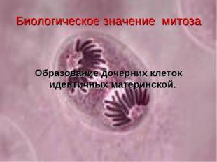 Биологическое значение митоза Образование дочерних клеток идентичных материнс