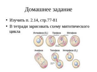 Домашнее задание Изучить п. 2.14, стр.77-81 В тетради зарисовать схему митоти