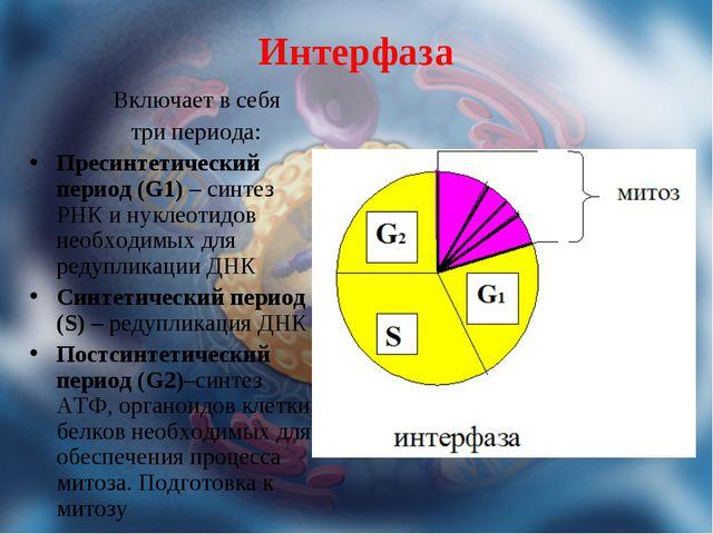 Интерфаза Включает в себя три периода: Пресинтетический период (G1) – синтез...