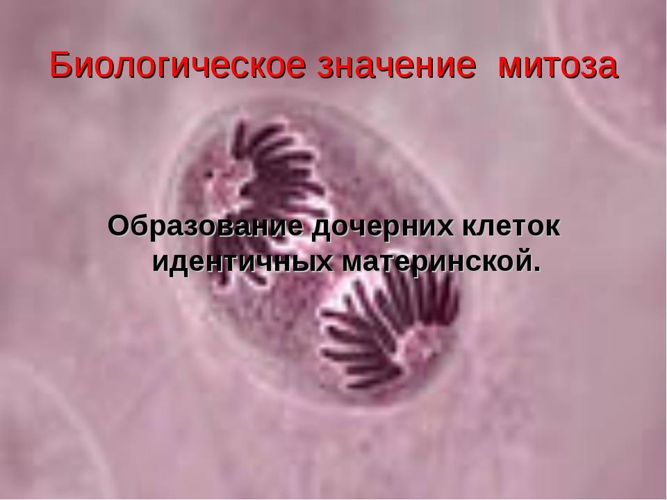 Биологическое значение митоза Образование дочерних клеток идентичных материнс...