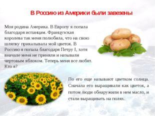 В Россию из Америки были завезены Моя родина Америка. В Европу я попала благо
