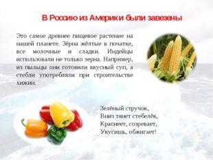 В Россию из Америки были завезены Это самое древнее пищевое растение на нашей