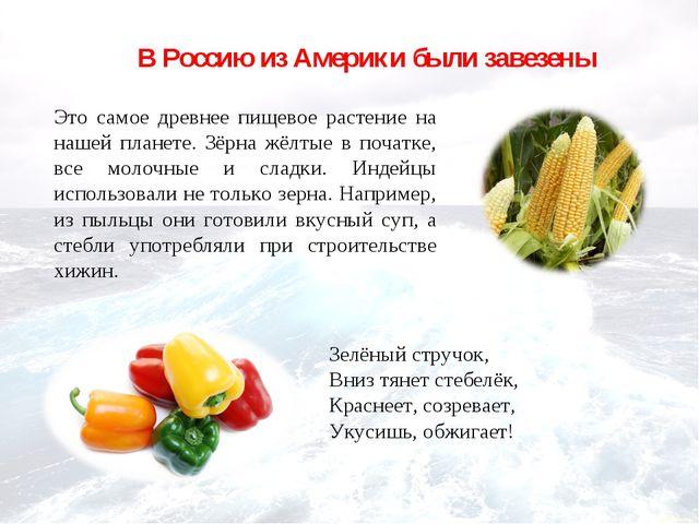 В Россию из Америки были завезены Это самое древнее пищевое растение на нашей...
