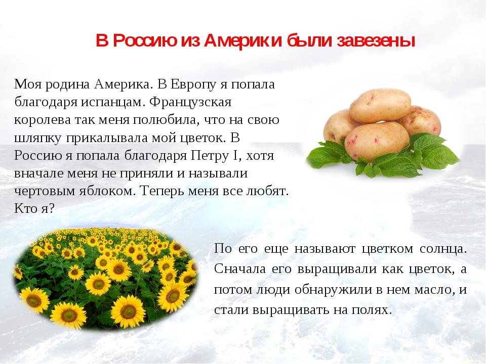 В Россию из Америки были завезены Моя родина Америка. В Европу я попала благо...