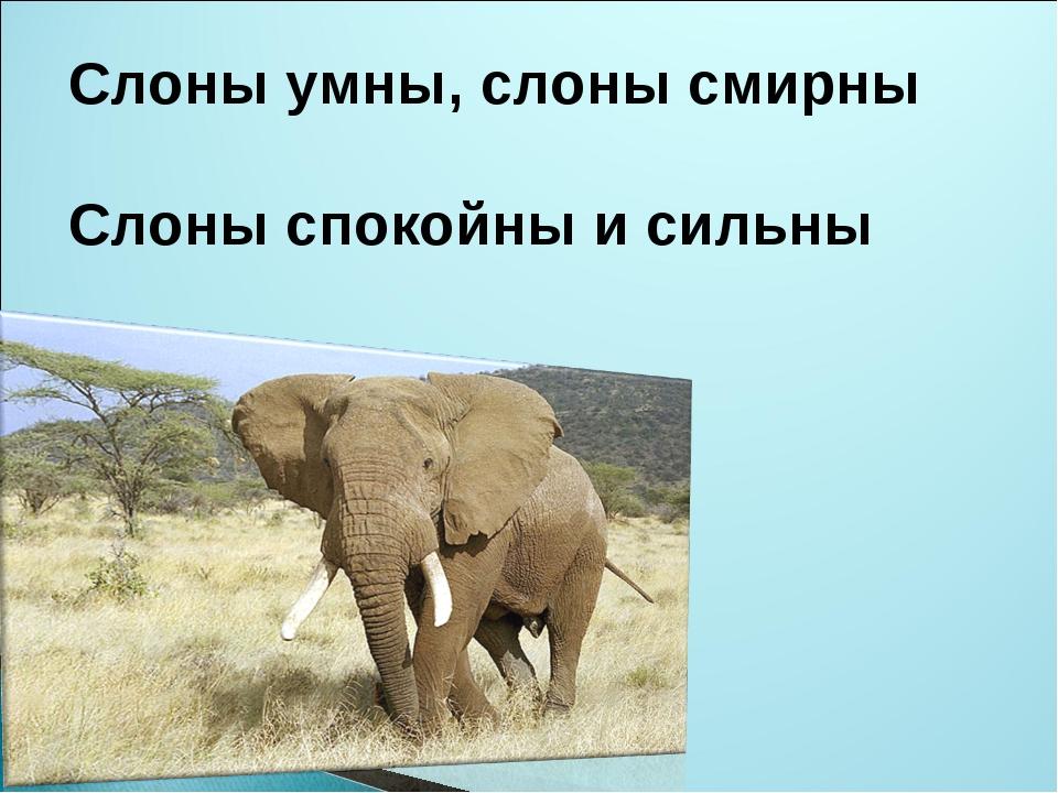 Слоны умны, слоны смирны Слоны спокойны и сильны