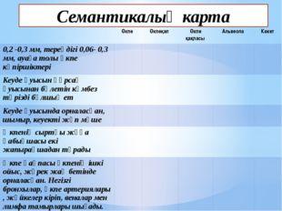 Семантикалық карта Өкпе Өкпеқап Өкпе қақпасы Альвеола Көкет 0,2-0,3 мм, терең