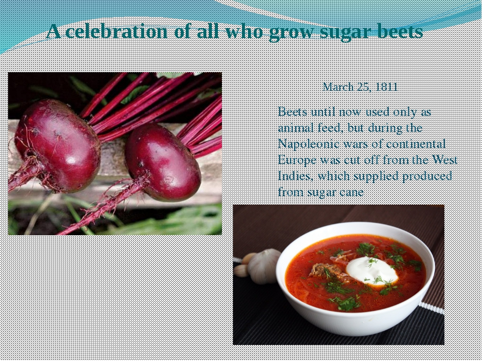 A celebration of all who grow sugar beets Beets until now used only as anima...