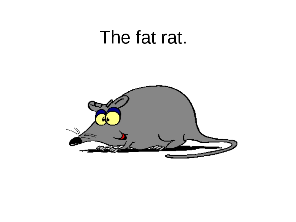 The fat rat.