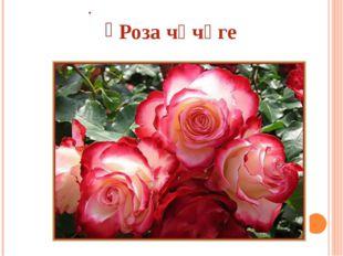 . Роза чәчәге