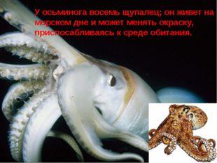 У осьминога восемь щупалец; он живет на морском дне и может менять окраску, п