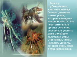 Также у глубоководных животных иногда бывают длинные тонкие усики, которые на
