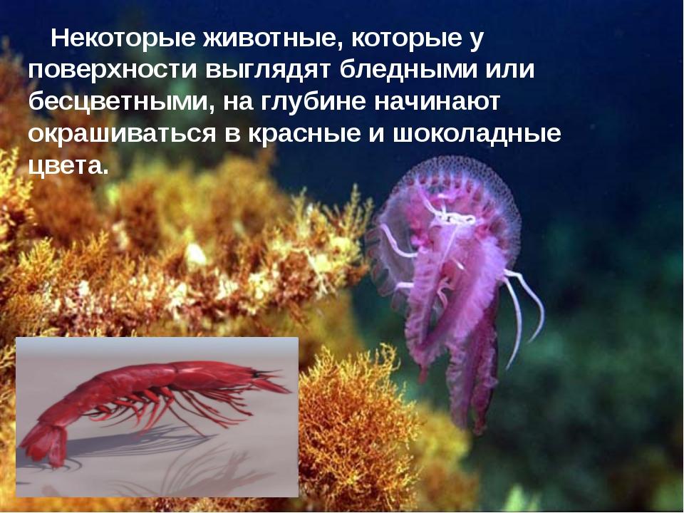 Некоторые животные, которые у поверхности выглядят бледными или бесцветными,...