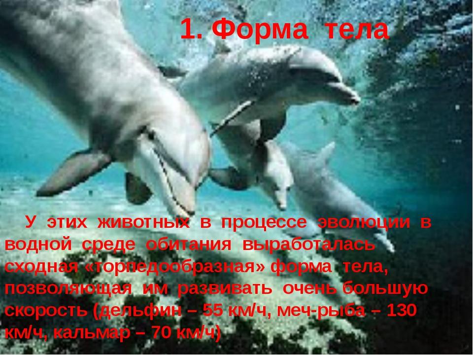 У этих животных в процессе эволюции в водной среде обитания выработалась схо...