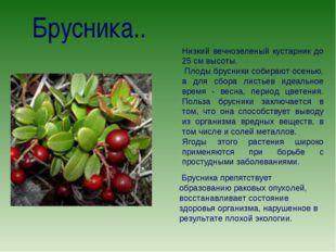 Брусника.. Низкий вечнозеленый кустарник до 25 см высоты. Плоды брусники соби