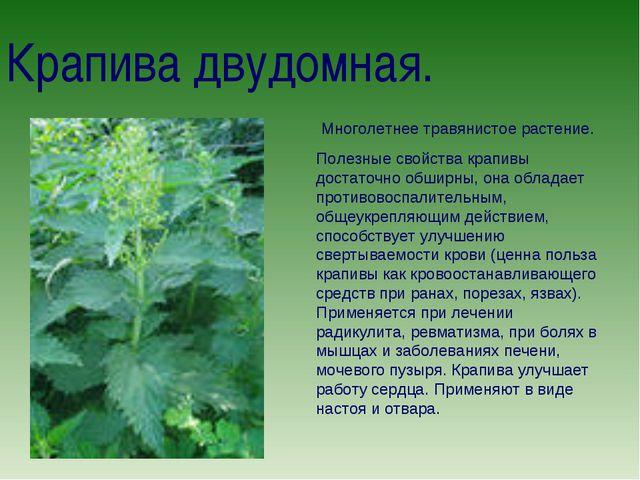 Крапива двудомная. Многолетнее травянистое растение. Полезные свойства крапив...