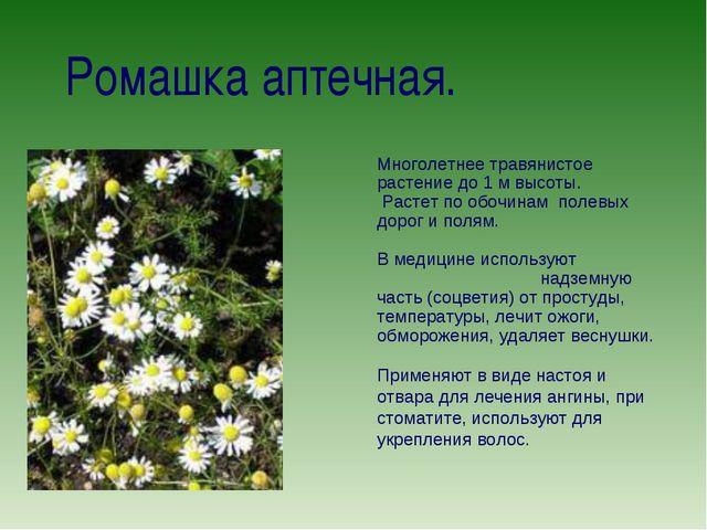 Ромашка аптечная. Многолетнее травянистое растение до 1 м высоты. Растет по...