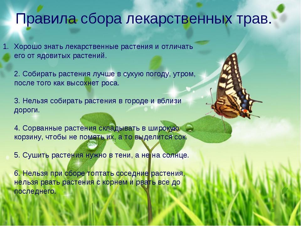 Правила сбора лекарственных трав. Хорошо знать лекарственные растения и отли...