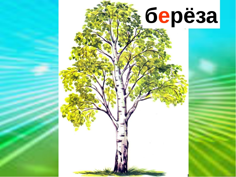 Клейкие почки, Зелёные листочки, С белой корой Стоит под горой. берёза